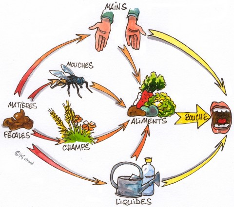 Cycle contamination (in French) - Resources • SuSanA